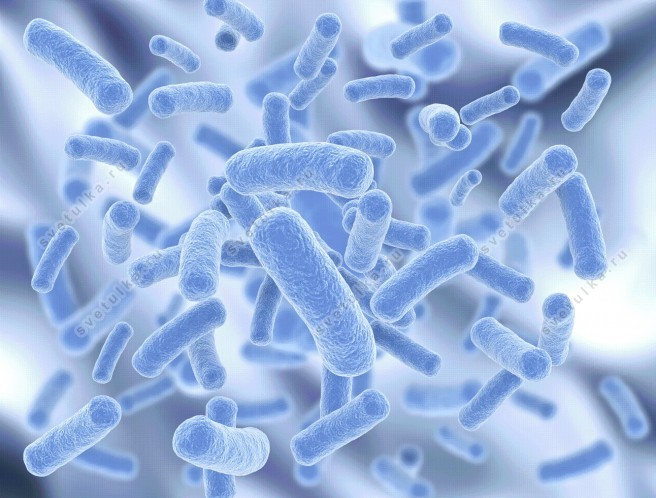 Антибиотики для лечения кишечной палочки в мазке thumbnail